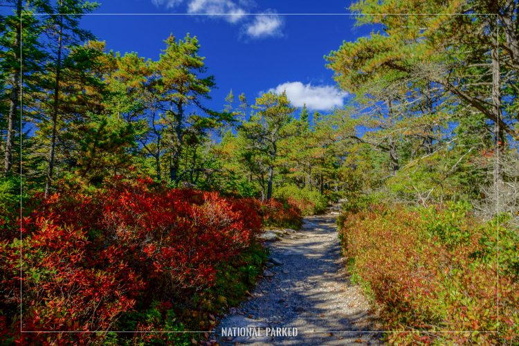 Wonderland Trail in Acadia National Park in Maine
