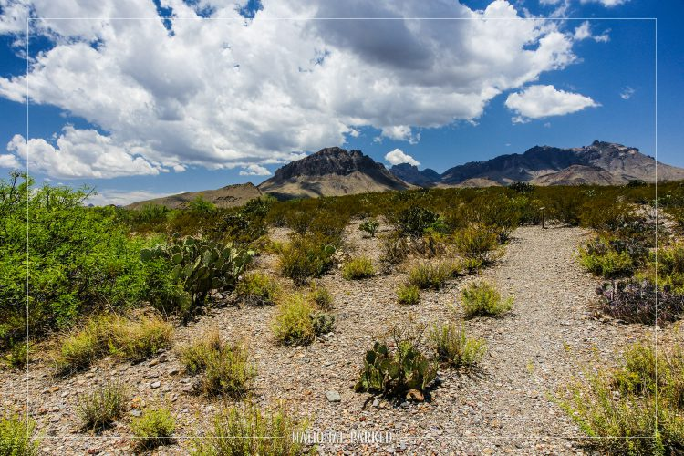 Chihuahuan Desert Nature Trail in Big Bend National Park in Texas