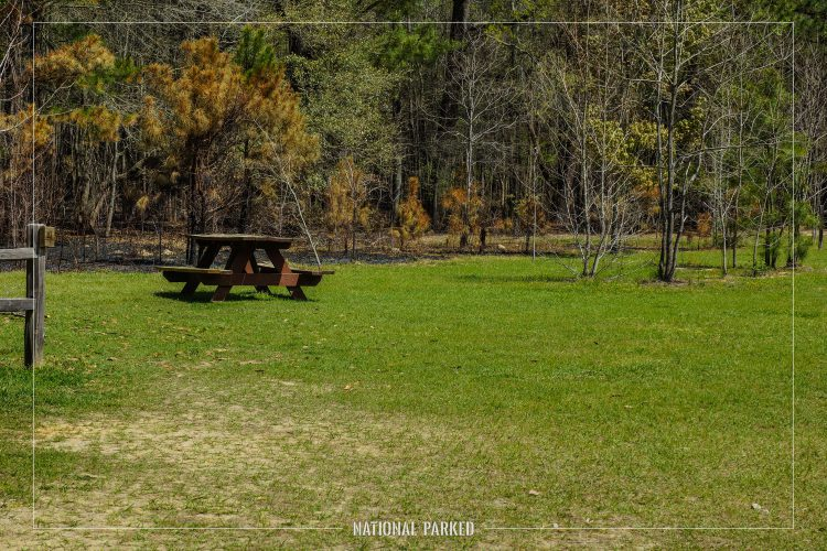 Longleaf Campground in Congaree National Park in South Carolina