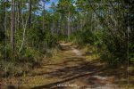 Long Pine Key Trail in Everglades National Park in Florida
