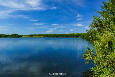 Paurotis Pond in Everglades National Park in Florida