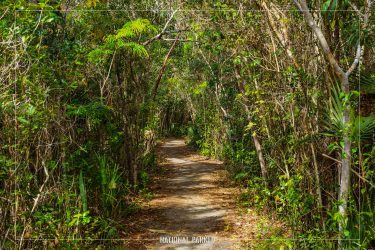 Pinelands Trail in Everglades National Park in Florida