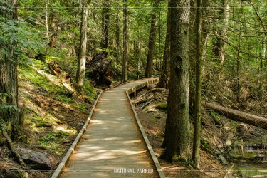 Trail of the Cedars in Glacier National Park in Montana
