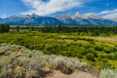 Blacktail Ponds Overlook in Grand Teton National Park in Wyoming