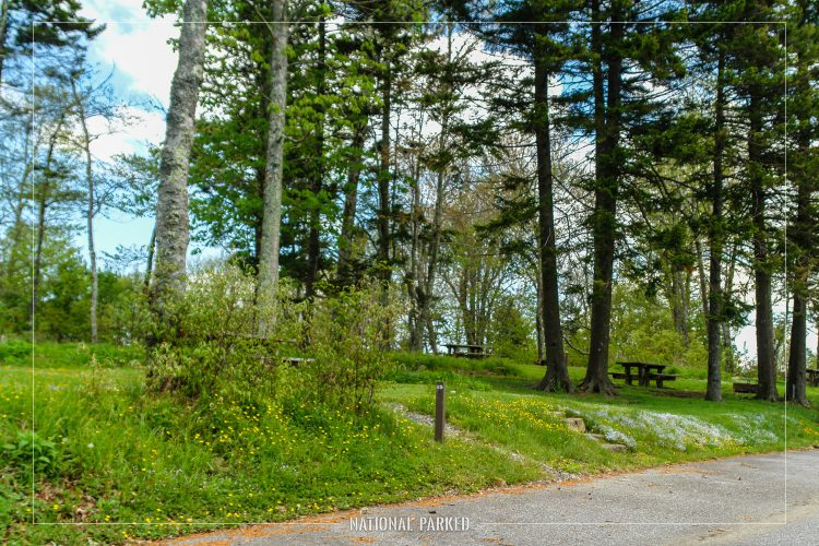 Balsam Mountain Campground in Great Smoky Mountains National Park in North Carolina