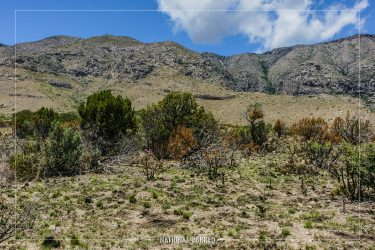 Manzanita Spring Trail in Guadalupe Mountains National Park in Texas