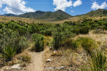 McKittrick Canyon Nature Loop in Guadalupe Mountains National Park in Texas