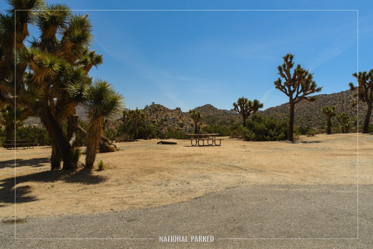 Black Rock Campground in Joshua Tree National Park in California