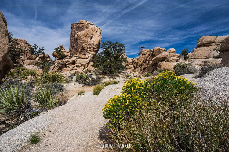 Hidden Valley Nature Trail in Joshua Tree National Park in California