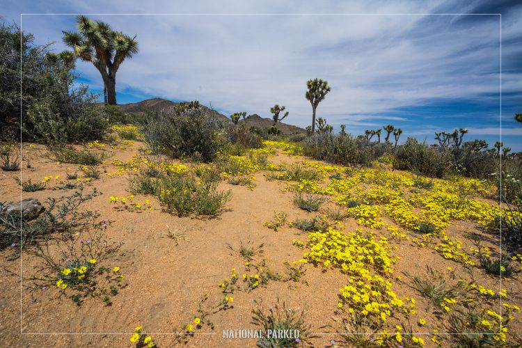 Lost Horse Valley in Joshua Tree National Park in California