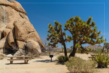 Quail Spring Picnic Area in Joshua Tree National Park in California