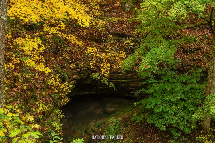 Sand Cave Trail in Mammoth Cave National Park in Kentucky