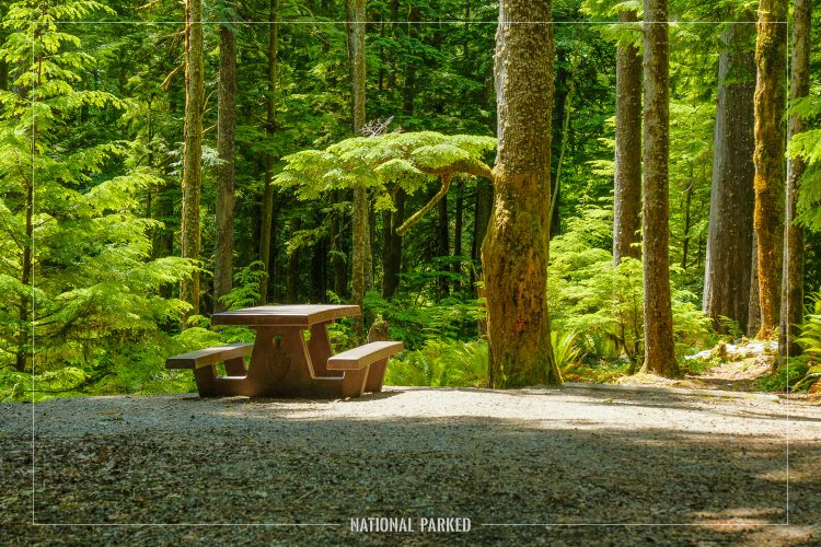 Fairholme Campground in Olympic National Park in Washington
