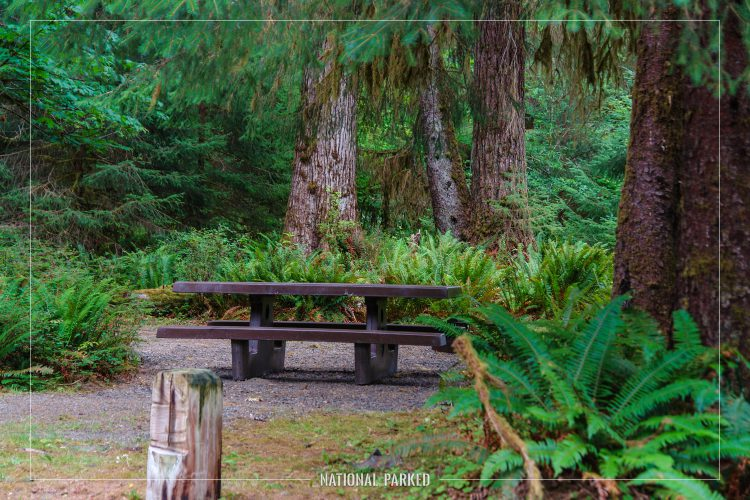 Hoh Campground in Olympic National Park in Washington