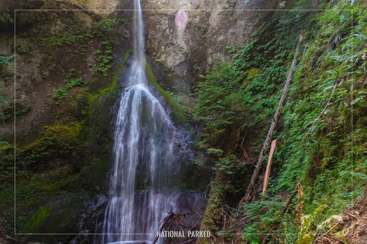 Marymere Falls in Olympic National Park in Washington