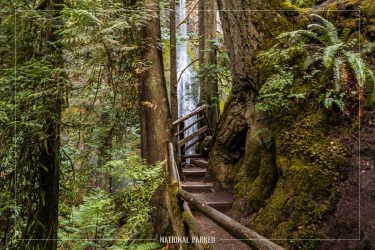 Marymere Falls Trail in Olympic National Park in Washington