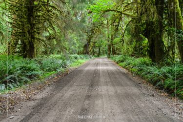 Quinault North Shore Road in Olympic National Park in Washington