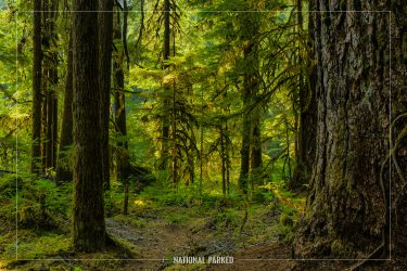 Sol Duc Forest in Olympic National Park in Washington