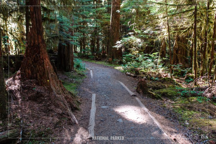 Sol Duc Trail in Olympic National Park in Washington