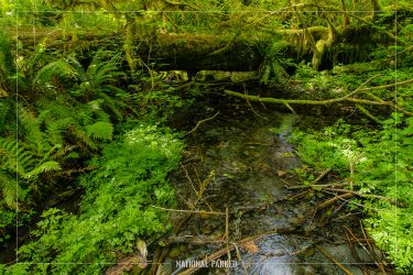 Spruce Nature Trail in Olympic National Park in Washington