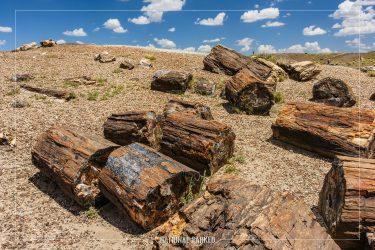 Crystal Forest in Petrified Forest National Park in Arizona