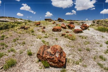Rainbow Forest in Petrified Forest National Park in Arizona