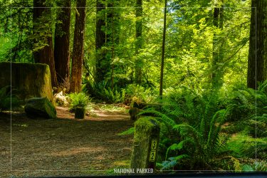 Mill Creek Campground in Redwood National Park in California