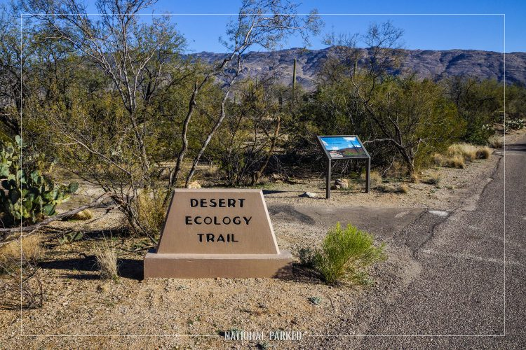 Desert Ecology Trail in Saguaro National Park in Arizona