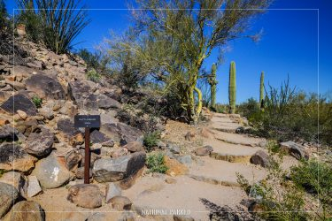 Signal Hill Trail in Saguaro National Park in Arizona