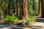 Big Trees Trail Parking Area in Sequoia National Park in California