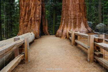 Congress Trail in Sequoia National Park in California