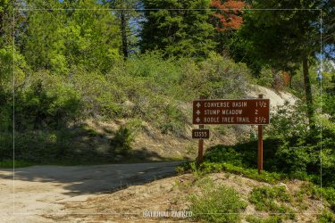 Converse Basin Road in Sequoia National Forest in California