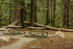 Pinewood Picnic Area in Sequoia National Park in California