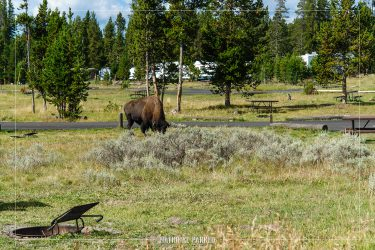 Bridge Bay Campground in Yellowstone National Park in Wyoming