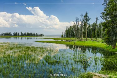 Pelican Creek in Yellowstone National Park in Wyoming