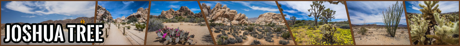 Joshua Tree header image