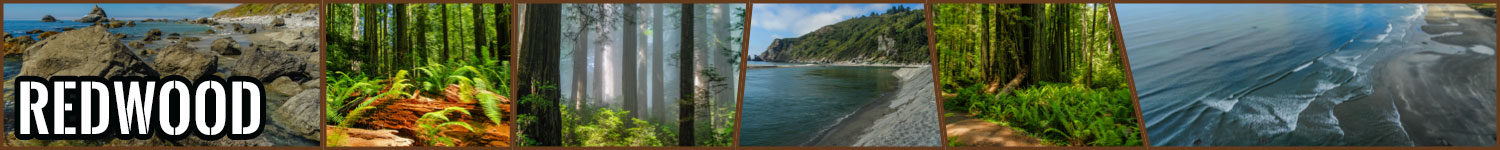 Redwood header image